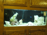 Choices Counseling Center, saltwater aquarium