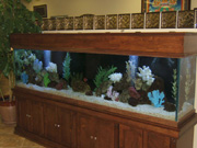 200 gallon marine fish tank