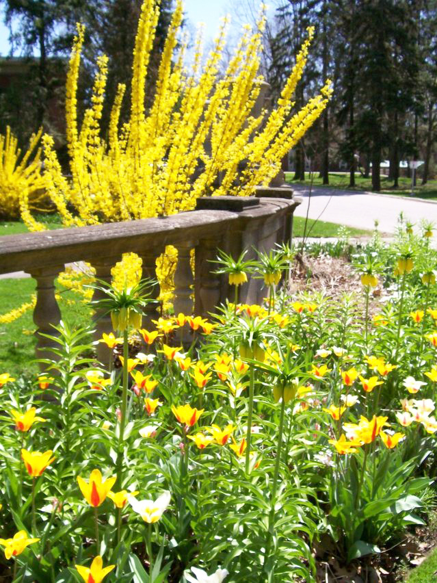 Plant non-toxic landscaping!