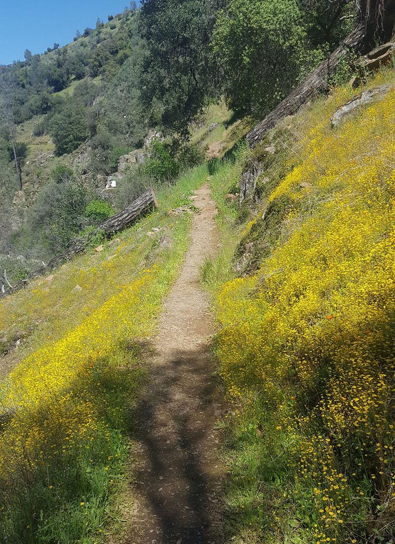 Hites Cove Trail in Yosemite