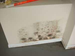mold 1