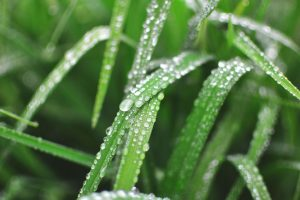 Discover how to protect your garden from thunderstorms and rain showers!