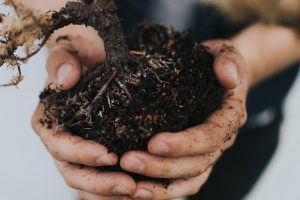 Planting a garden or landscape requires careful planning and preparation.