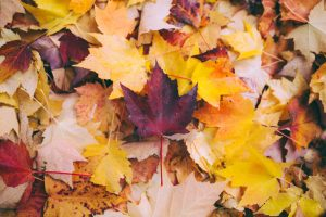The fall clean-up routine is not as rigorous as it once was. Read on to learn more!