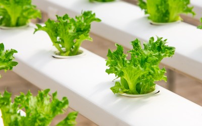 The Living Room Veggie Garden: Starting with Small Hydroponics