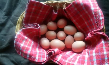 Renewable Resources – Eggs