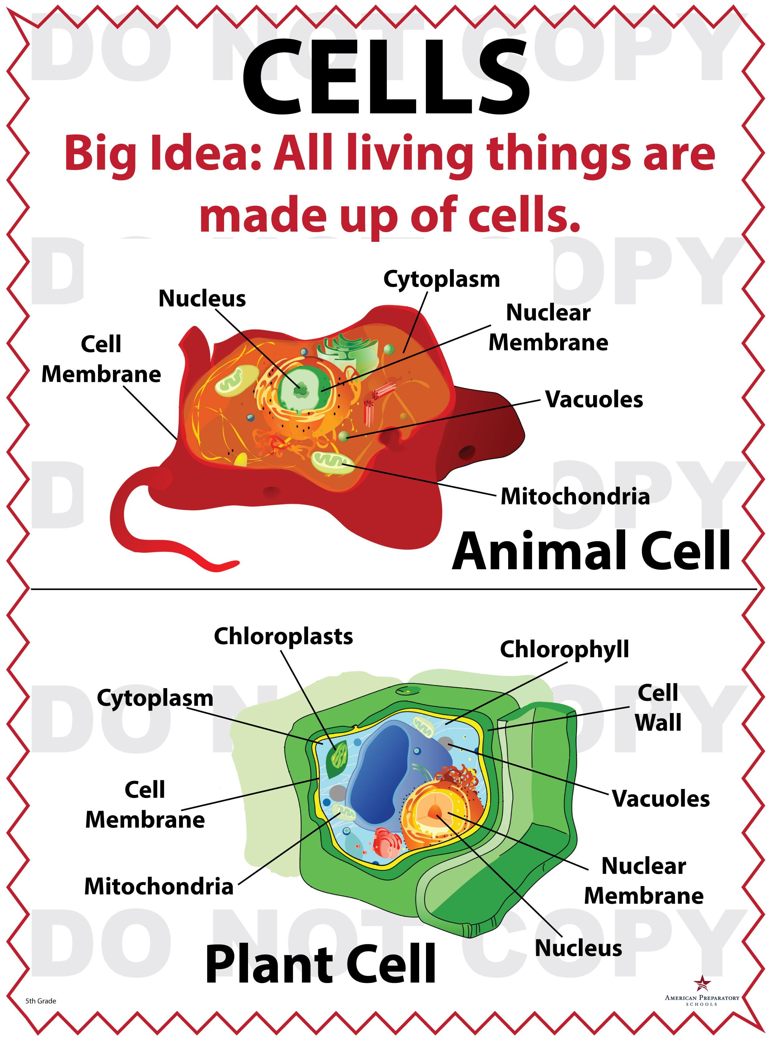 Cells 5th Grade