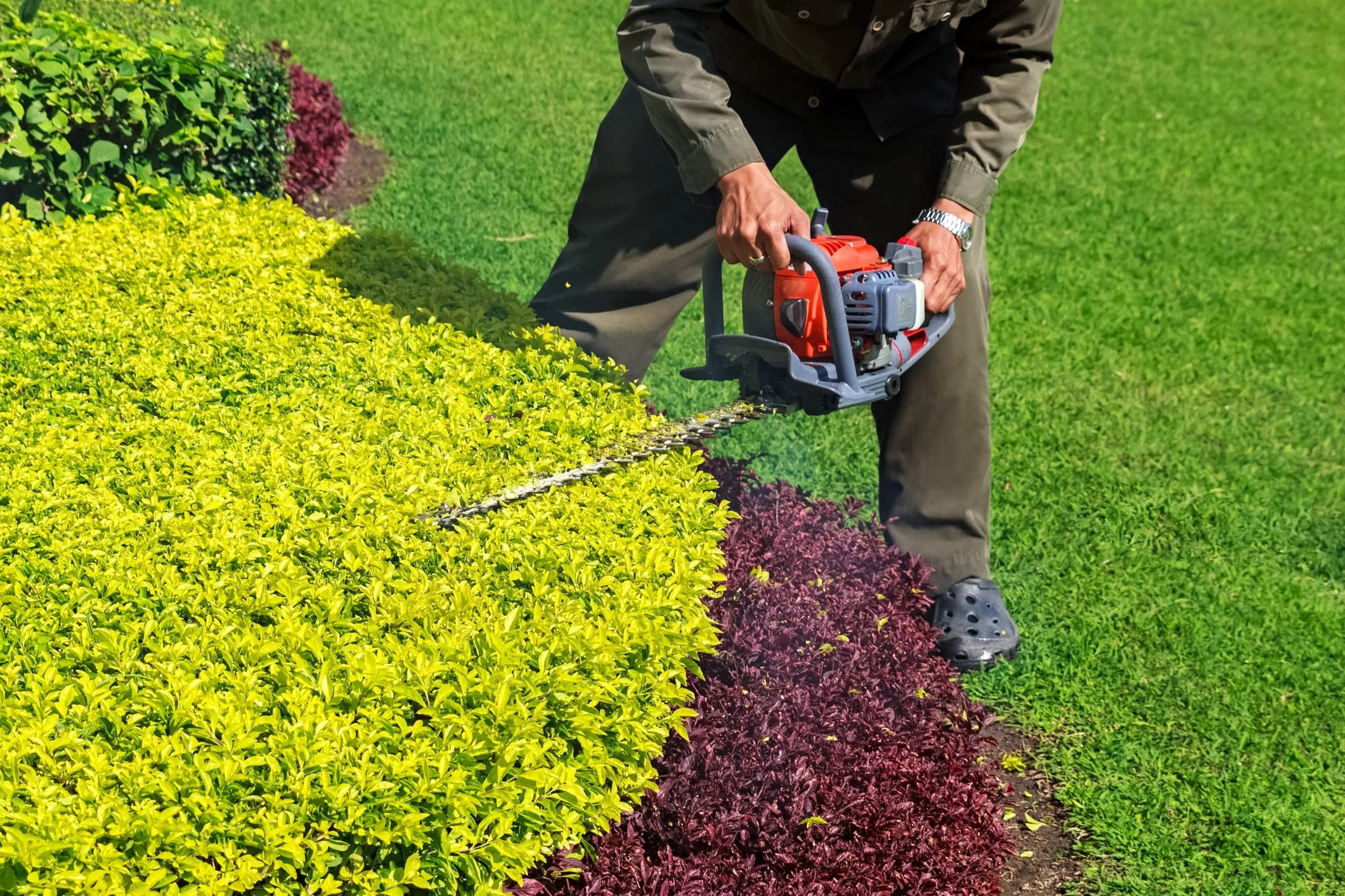gardener-trimming-shrub-with-hedge-trimmer-48881871