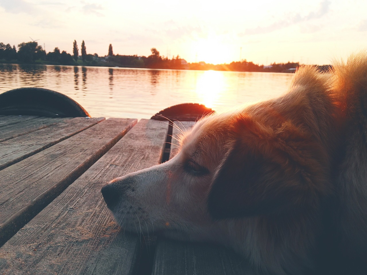 dog friendly vacations midwest