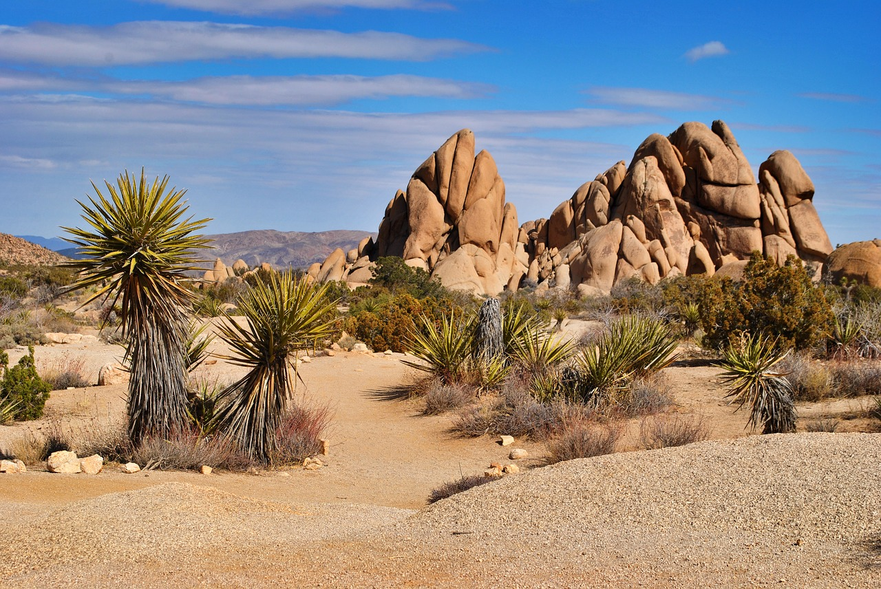 Joshua Tree USA