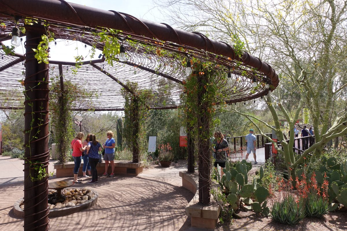 13 Desert Botanical Garden Tips for Your Best Visit Possible ...