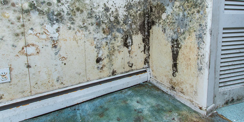 Image Result For How Do I Get Rid Of Mold In My Ba T