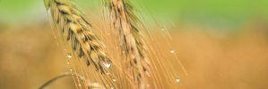 amerstem-green-bio-technology-genetics-company-applications-aggriculture-health0