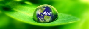 amerstem-green-bio-technology-genetics-company-sustainable-eco-saving-planet1