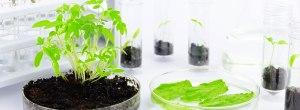 amerstem-green-bio-technology-company-applications-expanding-biomass