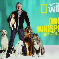 NAT GEO WILD SHOWCASE WITH CESAR MILLAN,  BOONE SMITH AND ZEB HOGAN