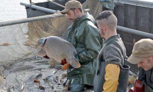poisson - Lindre (57) : Fête de la Grande Pêche