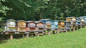 ruche - Dossier Apicultures et abeilles