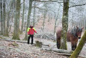 PierreSimlerEbba 022 - Quand le cheval labeur remplace le cheval vapeur