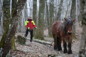 PierreSimlerEbba 023 - Quand le cheval labeur remplace le cheval vapeur