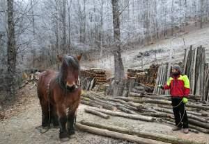 PierreSimlerEbba 026 - Quand le cheval labeur remplace le cheval vapeur