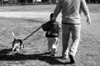 beagle errori foto