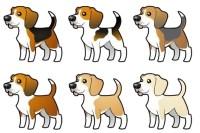 beagle colori foto
