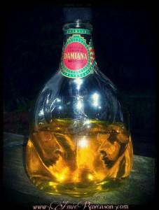 Damiana liquer
