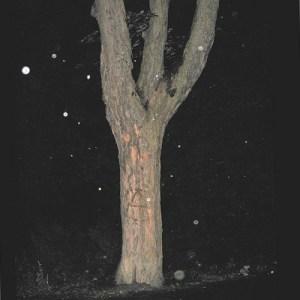 Tree shaped like Algiz