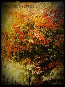 Autumn Flame