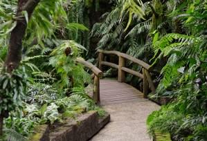 Puente Biodiversidad Amigos Enamorate Naturaleza