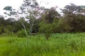 Reforestación en Cañón del Jabalí