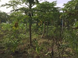 Restauración ecologica en Kiichpam Kaax