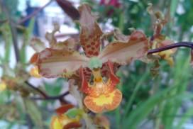 Orquídeas de Sian Ka'an