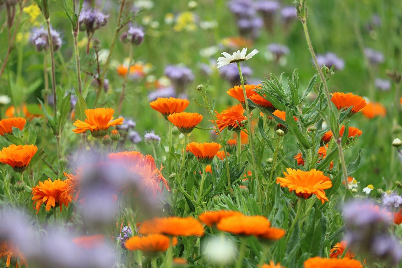 Por qué es importante la biodiversidad