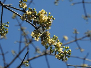 56 - Ceiba petandra (1)