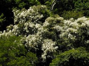 22 - Euphorbia sp