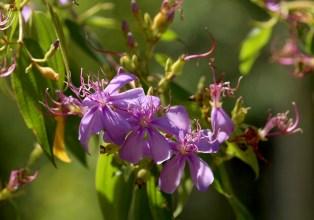 35-quaresma-arbusto