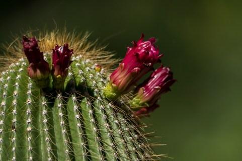 24 - cactus