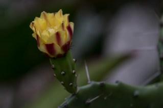 26 - cactus