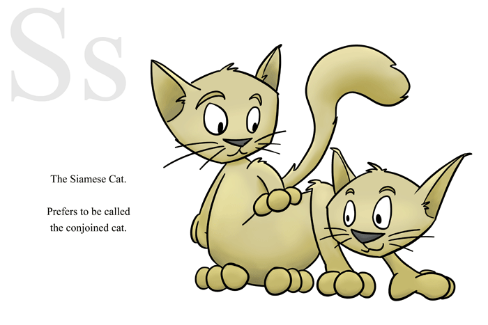 S is for Siamese Cat