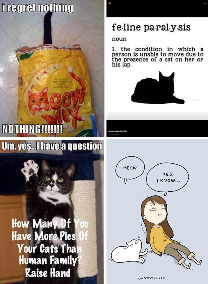 Funny Cat Meme Montage