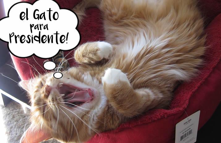 El Gato Para Presidente