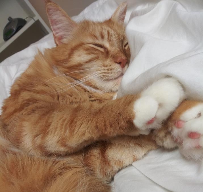 Max still snoozing.