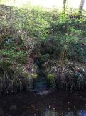 L'eau se frayait un passage à travers la végétation