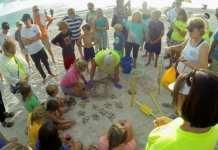 Turtle nest excavation