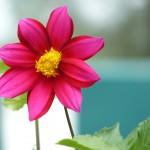 Macro (Flora) #1