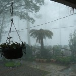 Nature (Mist)