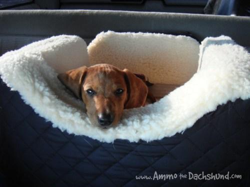 ammo car seat