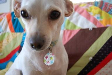 diy dog charms